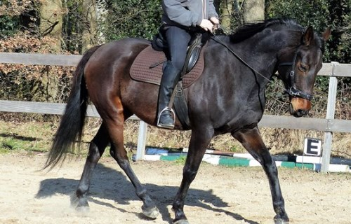 Meerdaagse-trainingen-500x320